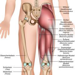 骨盤バランスエクササイズの特徴:二つの指導講座で構成
