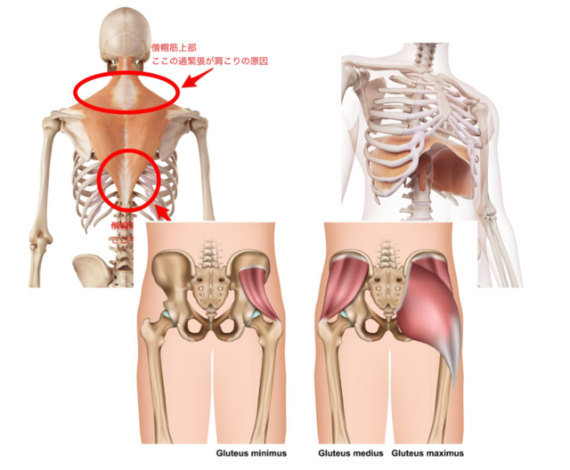 骨格から変わる!自分で骨盤矯正ができるようになるカリキュラム